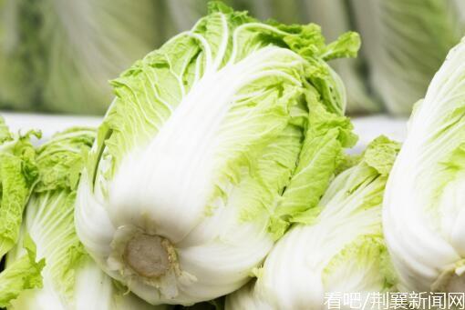 大白菜价格现低谷,猪肉价格上涨,还是吃大白菜减肥